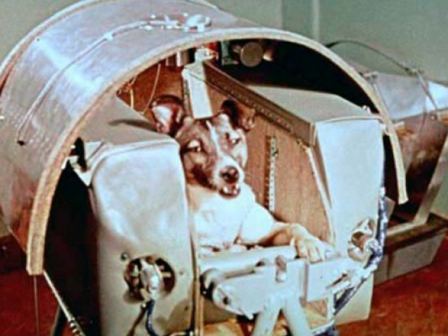 Who won the space race? Soviet animals did!